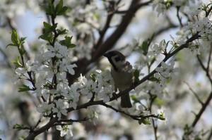 spring-179624_640